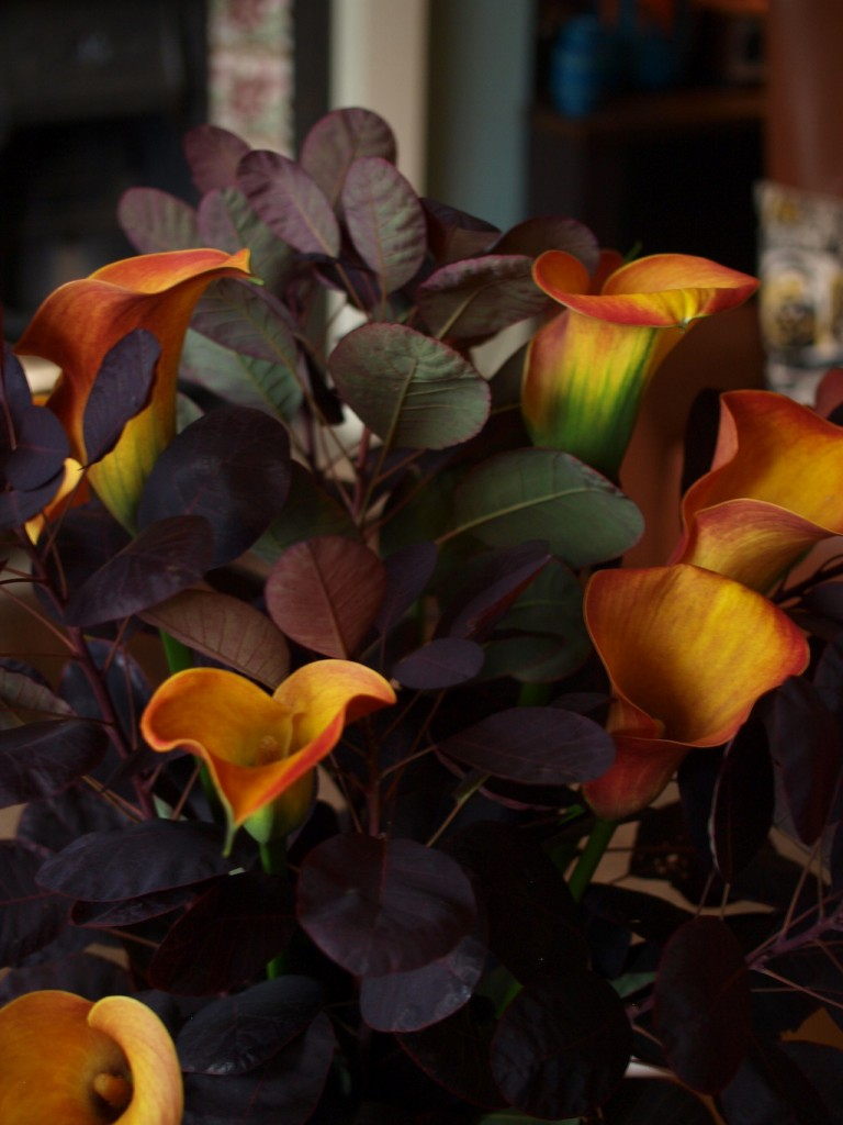 Calla and cotinus