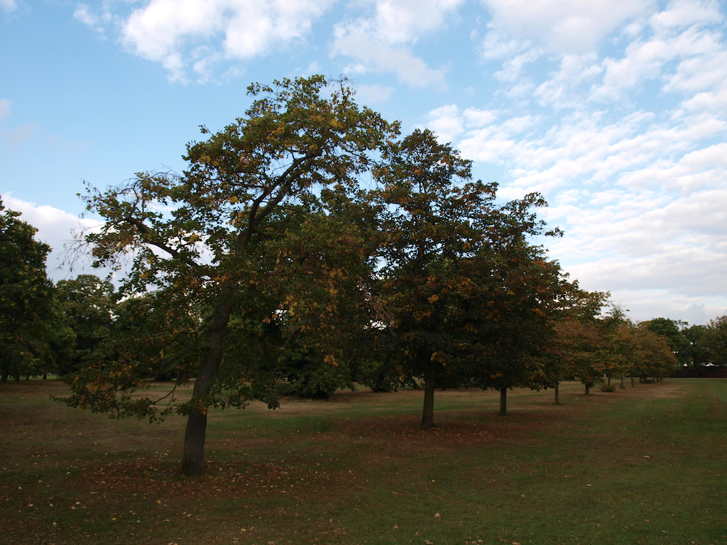 Greenwich Park Autumn Canary Wharf Observatory General Wolfe chestnuts William IV heart foragers walk