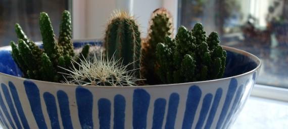 Cactus Garden Indoor Houseplants Low maintenance Garden Egon Walesch Interior Design Killinure Cottage Lough Ree Ireland Egon's Cottage Indigo Blue Bowl Marks & Spencer